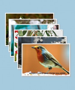 Christmas cards: Winter Nature x 6