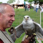 09 Raphael Falconry at Walkern Magna Carta Fair 27 06 2015 Andrew Lilly 04