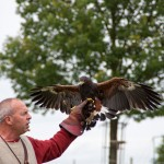 09 Raphael Falconry at Walkern Magna Carta Fair by Peter Ravilious 01