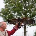 09 Raphael Falconry at Walkern Magna Carta Fair by Peter Ravilious 01