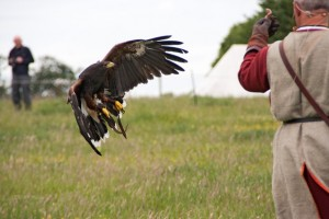 09 Raphael Falconry at Walkern Magna Carta Fair by Peter Ravilious 02