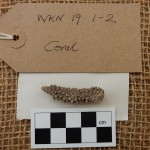 WKN 19 1-2 coral