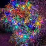 12. Christmas Festivitree (5 Brockwell Shott)