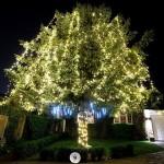 14. A tree-mendous Christmas (1 Brockwell Shott)
