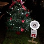 27. 'Beau' Tree (Friends of Lanvallay, 18 Finches End)